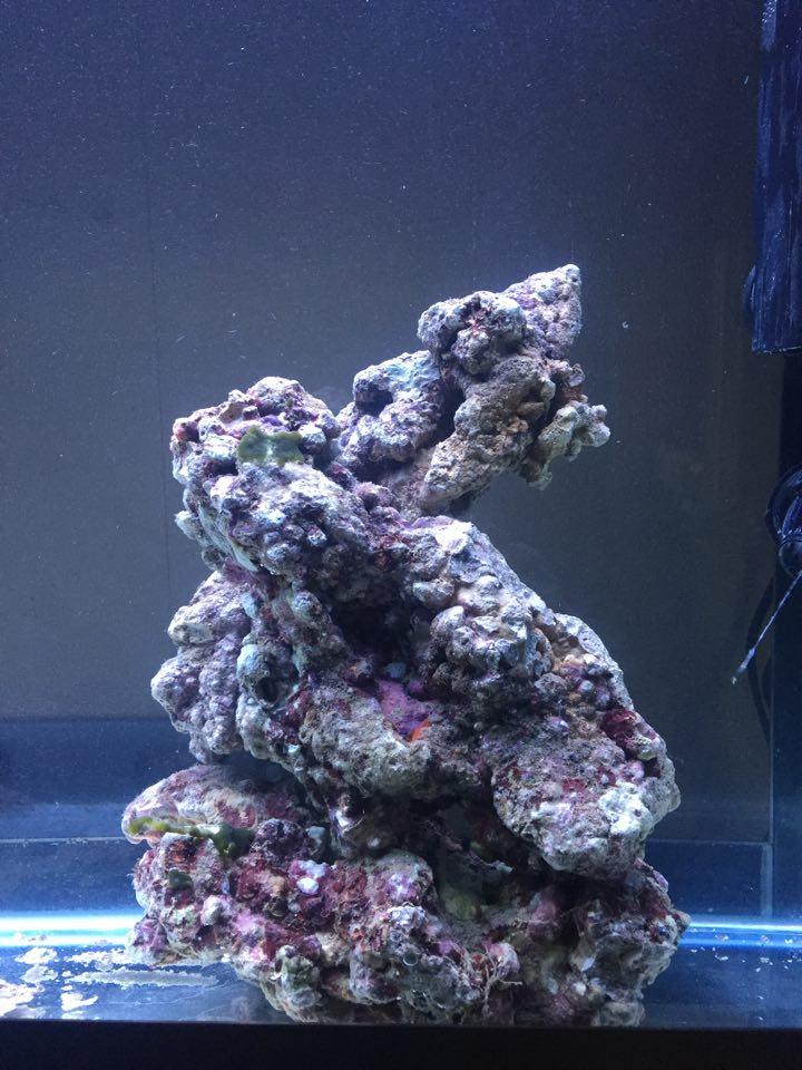 Bac de Mamsk - Reef plasma - Page 6 12506511