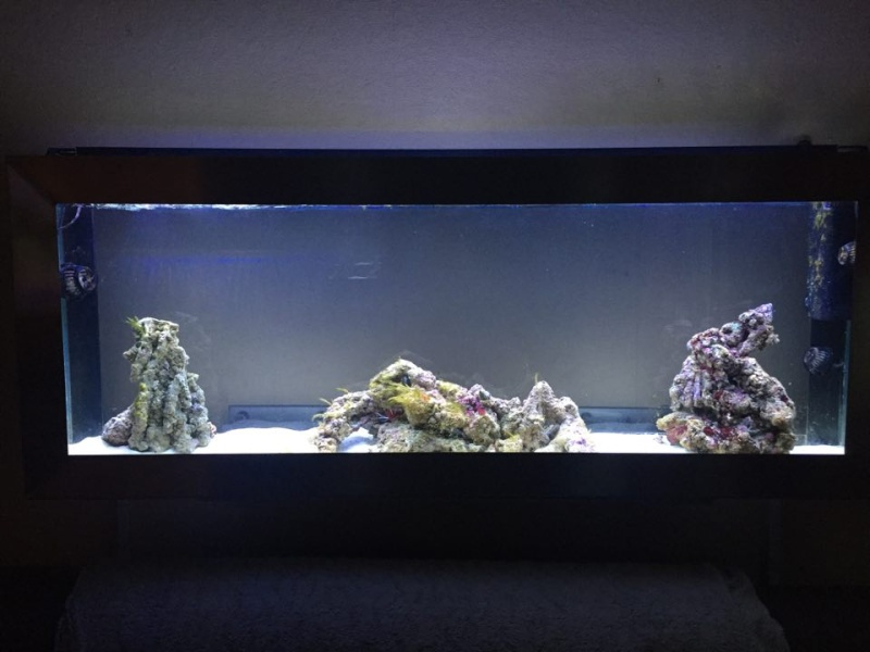 Bac de Mamsk - Reef plasma - Page 7 12746210