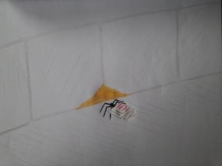 Un litigio strano Cam04010