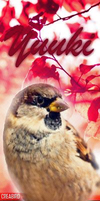 Azalée (Yuuki) Vava_y10