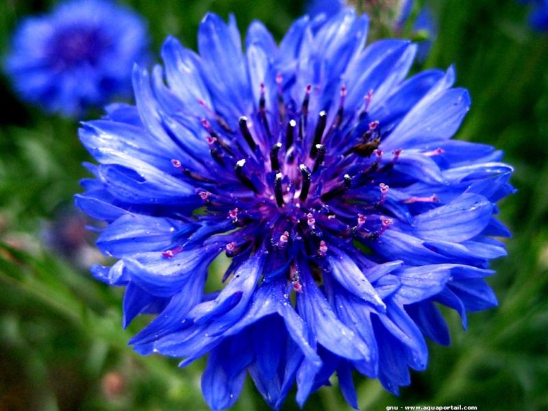 Fleurs  - Page 2 Anemon10