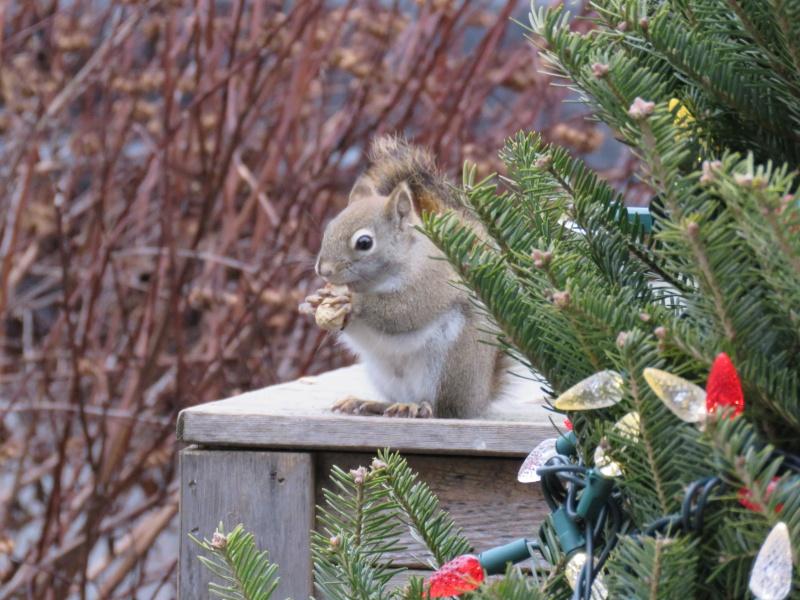 Joyeux Noël Scratt Img_7111