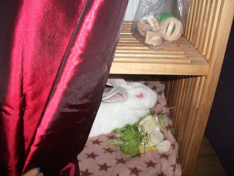 [ADOPTEE] Althéa, lapine de laboratoire à adopter 12219410
