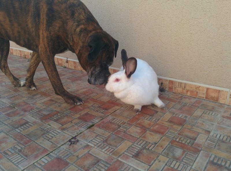 (clos) SOS 10 lapines de laboratoire - Page 3 12642510