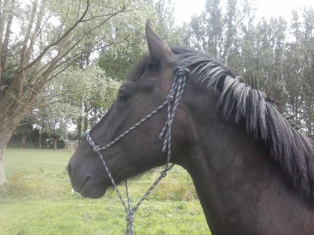 Apache, adopté en ... Apache10
