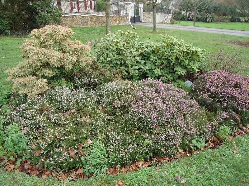Quelques plantes non carnivores ( hiver ) Dsc02422