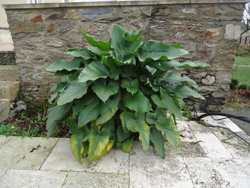 Quelques plantes non carnivores ( hiver ) Dsc02430