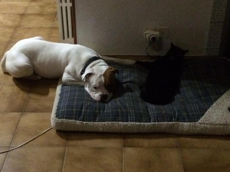 Cohabitation chien et chats - Page 11 Image32