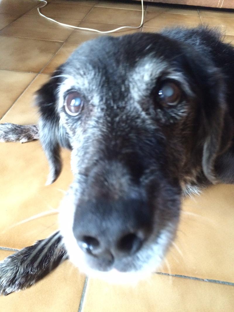 arthrose - Le vieux chien (chien vieillissant/âgé): conseils? - Page 2 Image63