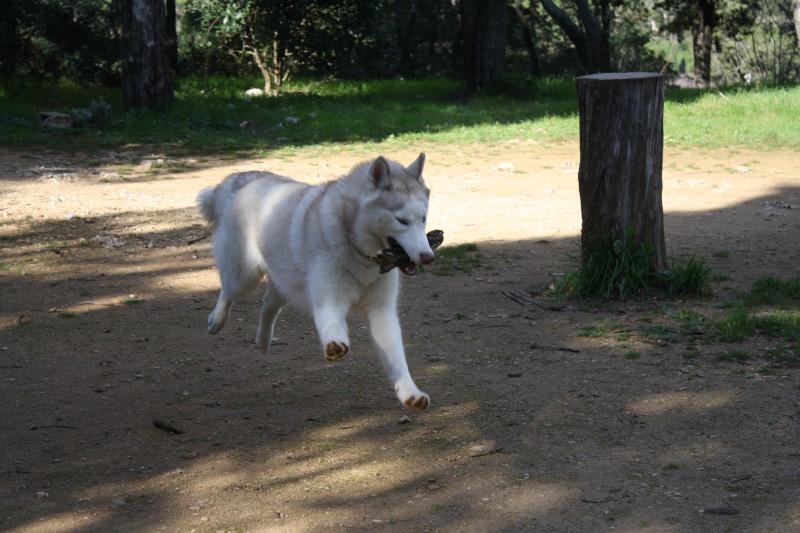 Lo-Jack Alias Ghost (Sibirian husky) - Page 3 Img_3013