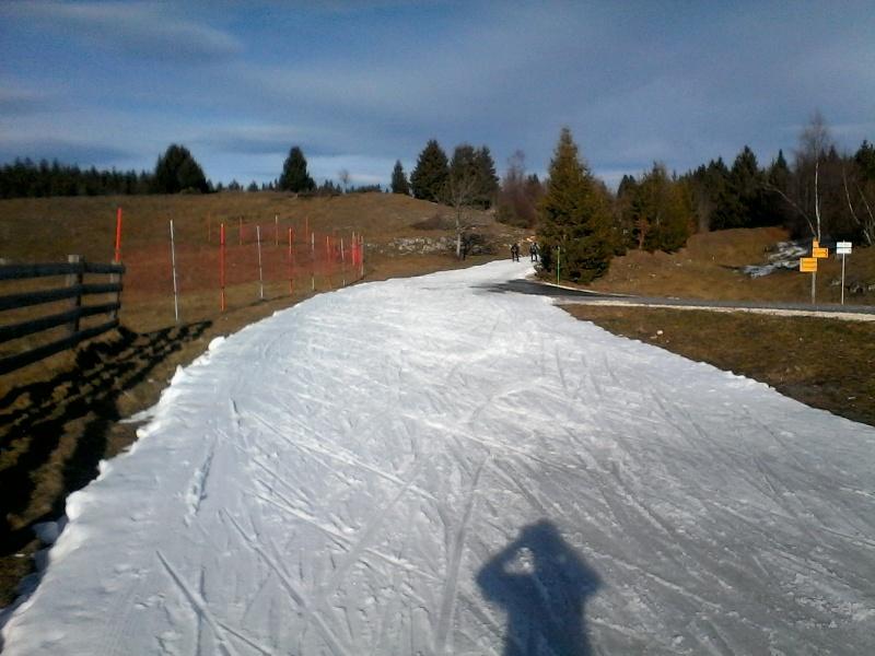 Manque de neige dans les stations de ski hiver 2015/2016 - Page 2 Foret_11