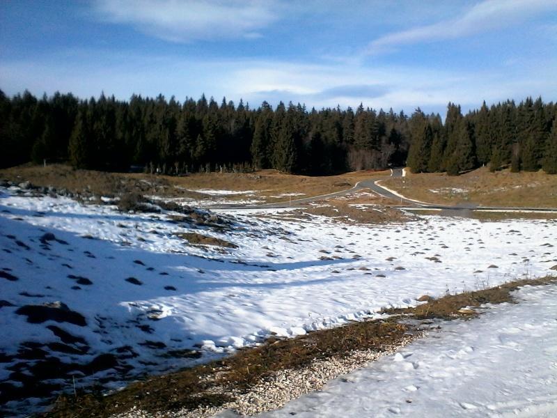 Manque de neige dans les stations de ski hiver 2015/2016 - Page 2 Foret_14