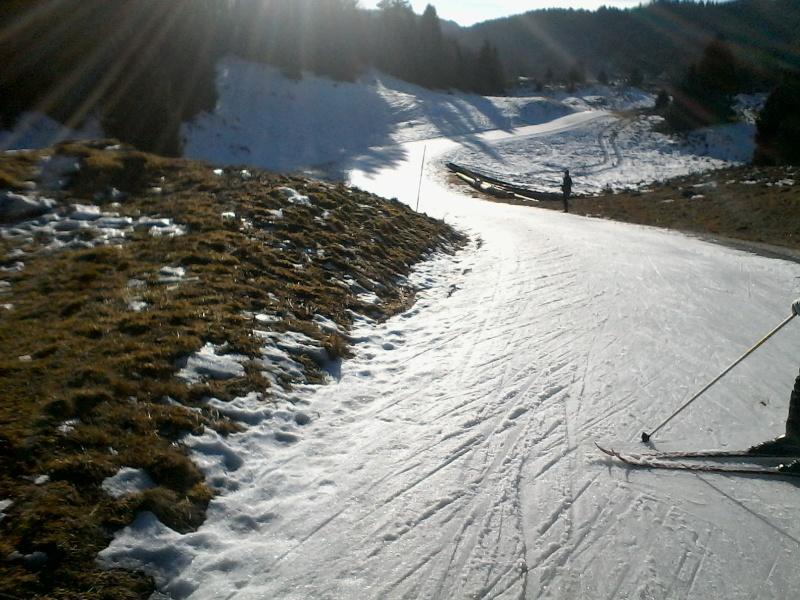 Manque de neige dans les stations de ski hiver 2015/2016 - Page 2 Foret_17