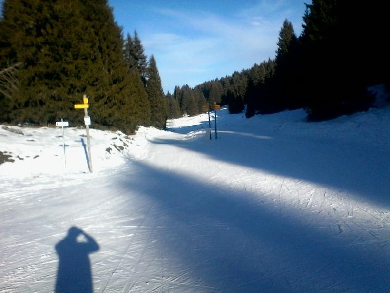 Manque de neige dans les stations de ski hiver 2015/2016 - Page 2 Foret_21