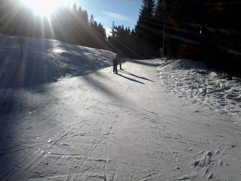 Manque de neige dans les stations de ski hiver 2015/2016 - Page 2 Foret_22