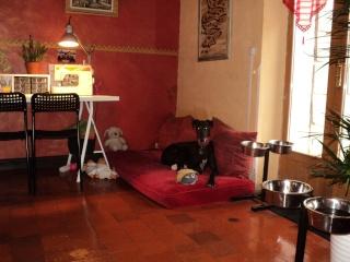 Raul ( Moro) galgo noir Adopté - Page 2 Dsc00525