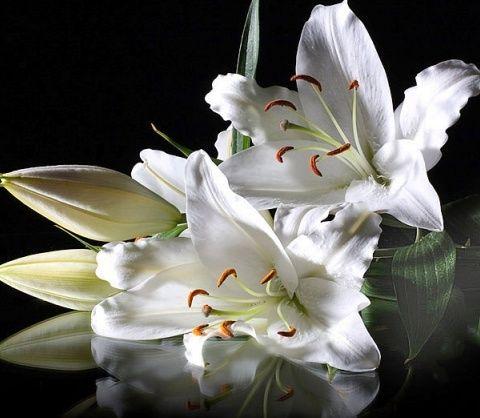 La fleur de Lys 33761310