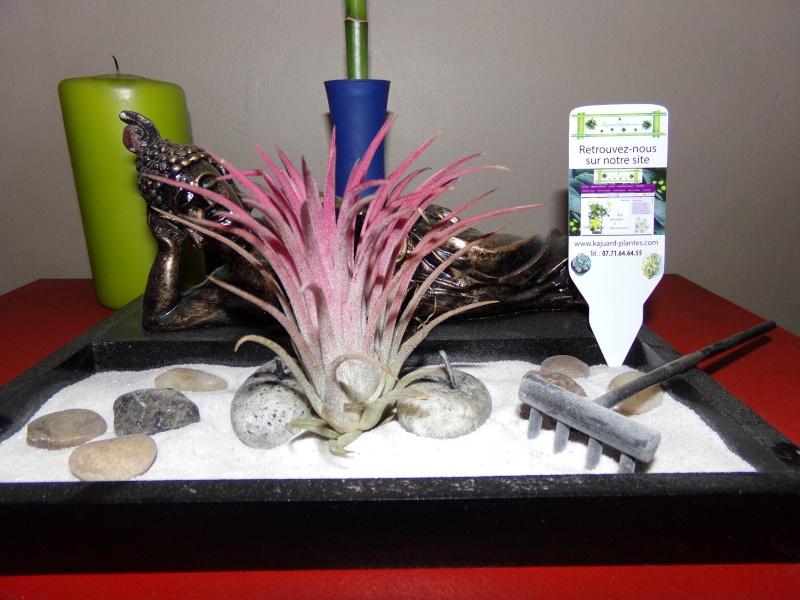 Kajuard-Plantes.com le site du membre Jeanmi 100_4612