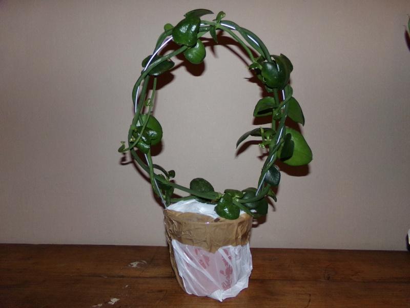 Kajuard-Plantes.com le site du membre Jeanmi 110