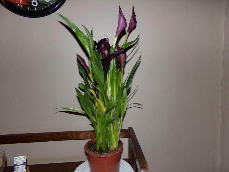 Kajuard-Plantes.com le site du membre Jeanmi 210