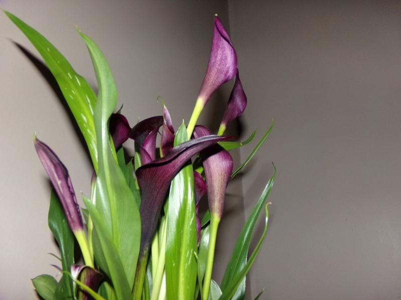 Kajuard-Plantes.com le site du membre Jeanmi 310