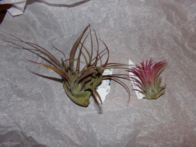 Kajuard-Plantes.com le site du membre Jeanmi 410
