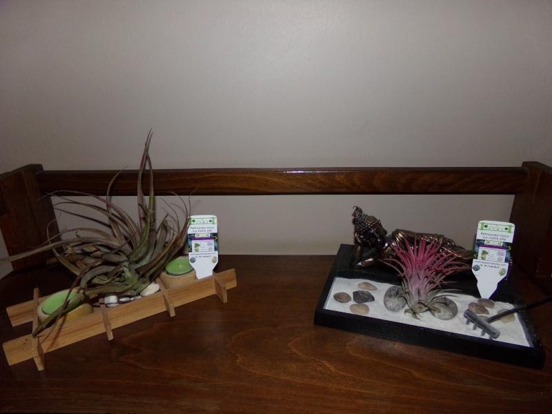 Kajuard-Plantes.com le site du membre Jeanmi 510