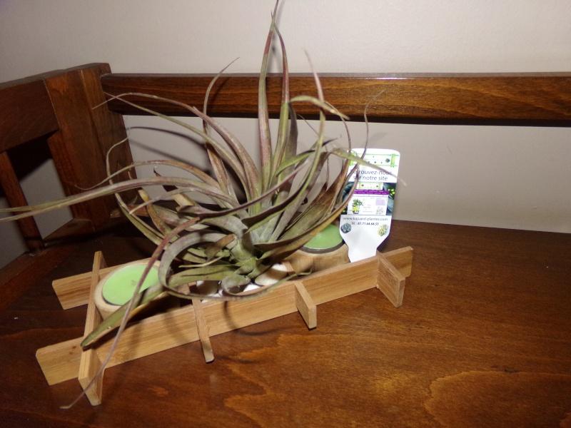 Kajuard-Plantes.com le site du membre Jeanmi 610