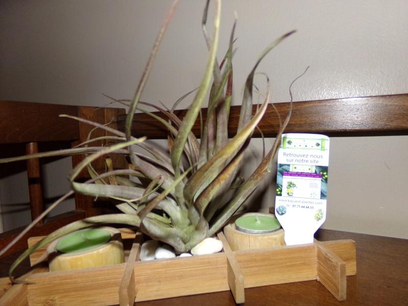 Kajuard-Plantes.com le site du membre Jeanmi 710