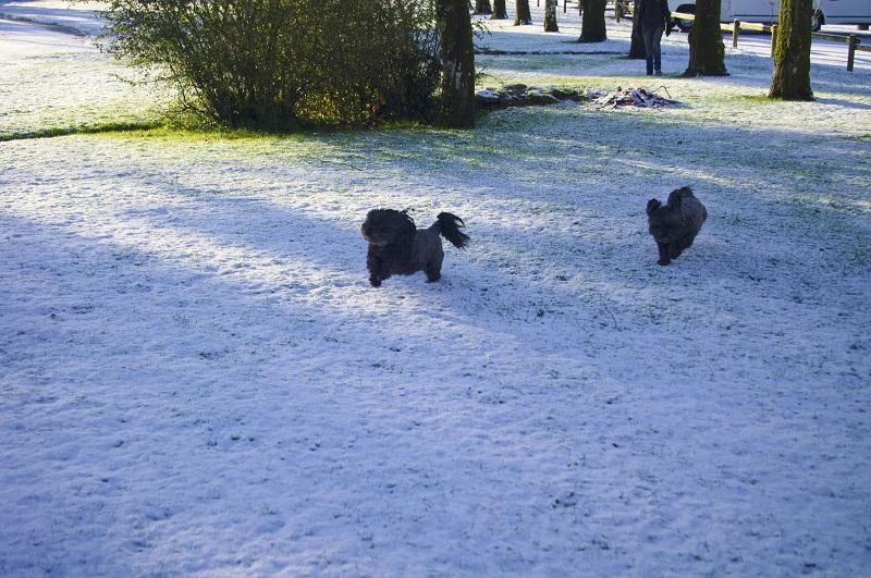 neige [pentax k20] _igp5210