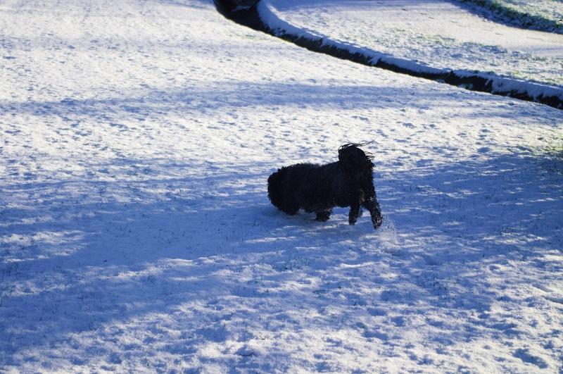 neige [pentax k20] _igp5211