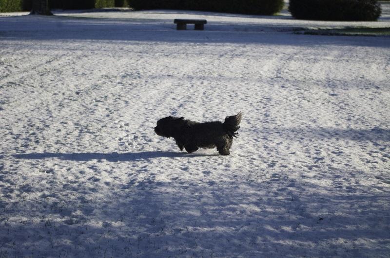 neige [pentax k20] _igp5212