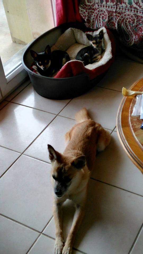 DELLA, femelle croisée chihuahua, née environ 2007, petite taille (refuge Anda et Alina) - adoptée par Danièle (dpt 82) - Page 6 Loopin12