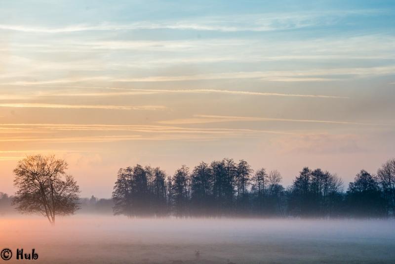 Campagne dans la brume du soir Brume_11