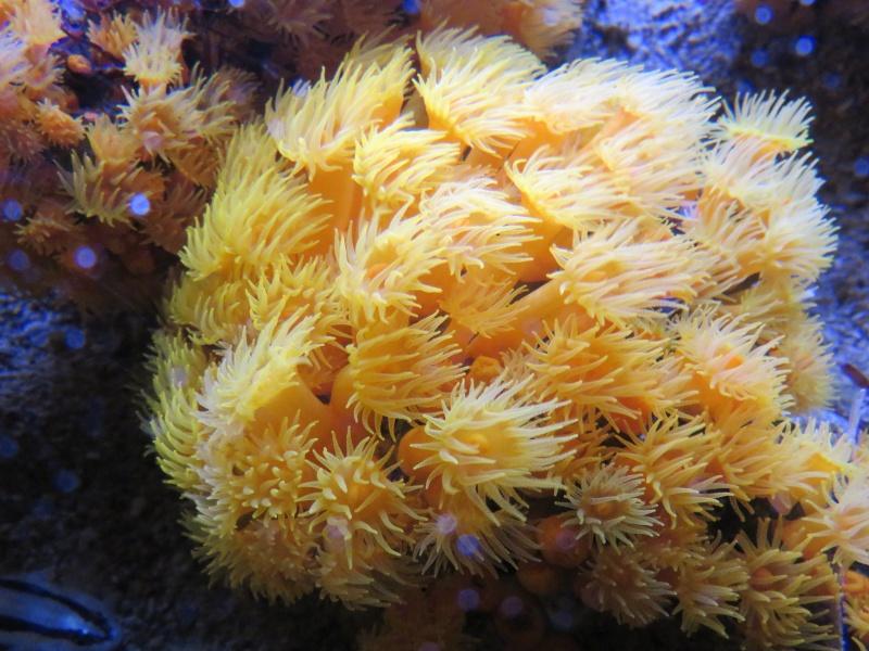 Musée océanographique de Monaco Img_1111