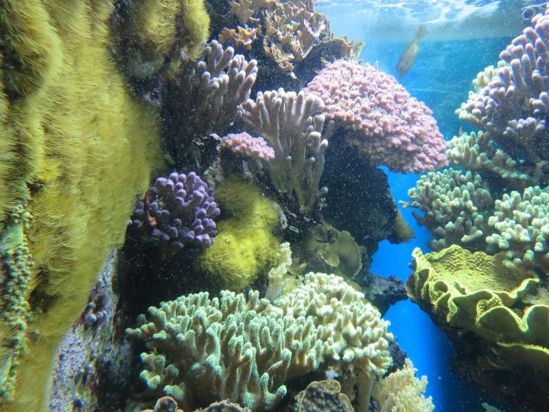 Musée océanographique de Monaco Img_1113