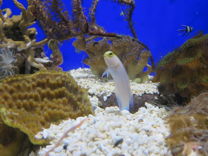 Musée océanographique de Monaco Img_1114