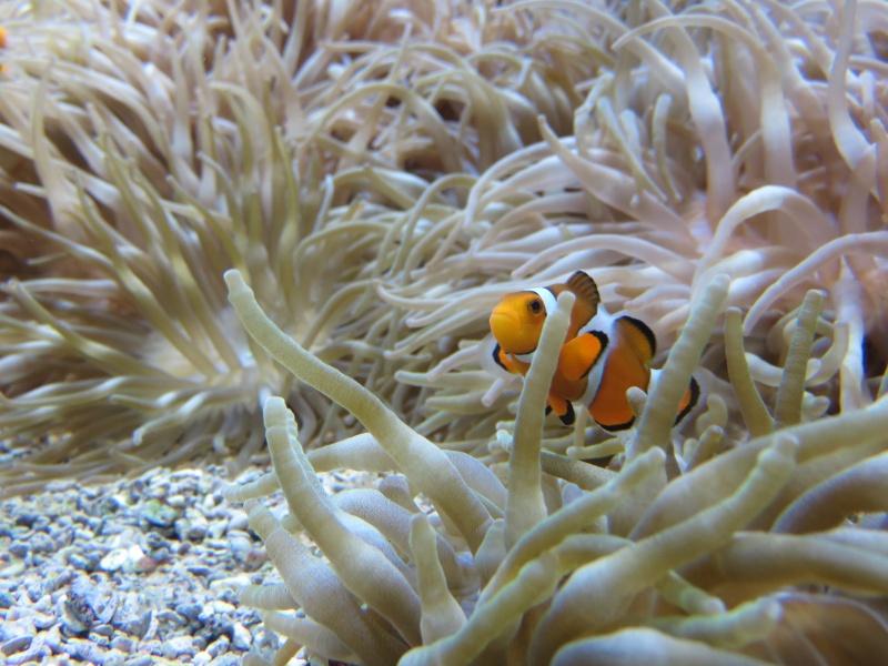 Musée océanographique de Monaco Img_1115