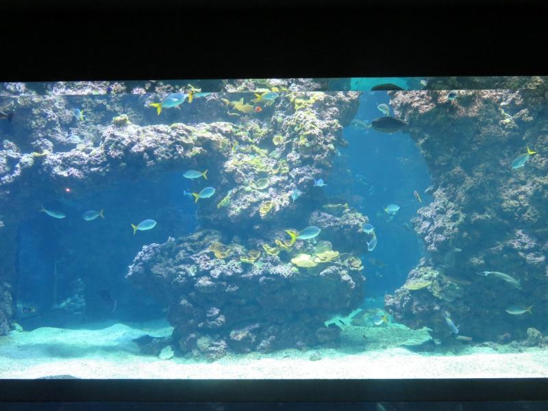 Musée océanographique de Monaco Img_1116