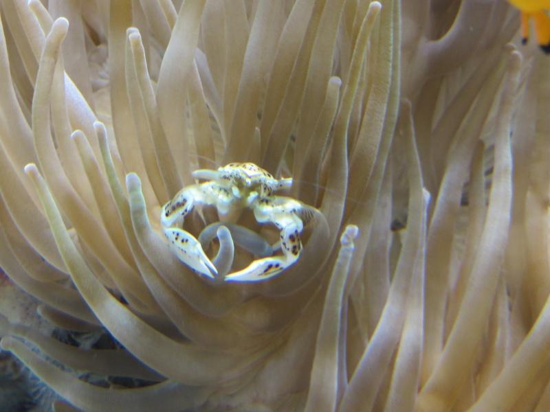Musée océanographique de Monaco Img_1210