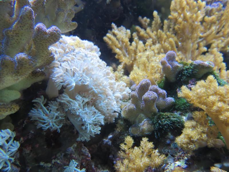 Musée océanographique de Monaco Img_1211