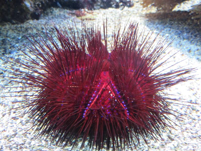Musée océanographique de Monaco Img_1213