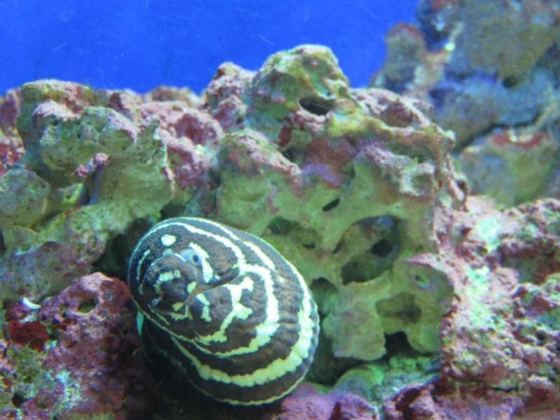 Musée océanographique de Monaco Img_1214