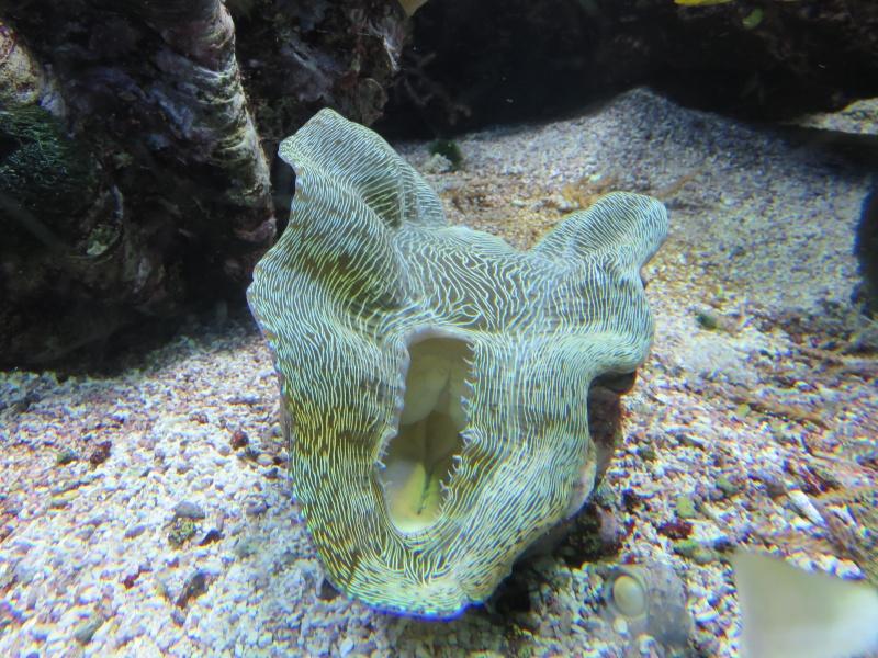 Musée océanographique de Monaco Img_1215
