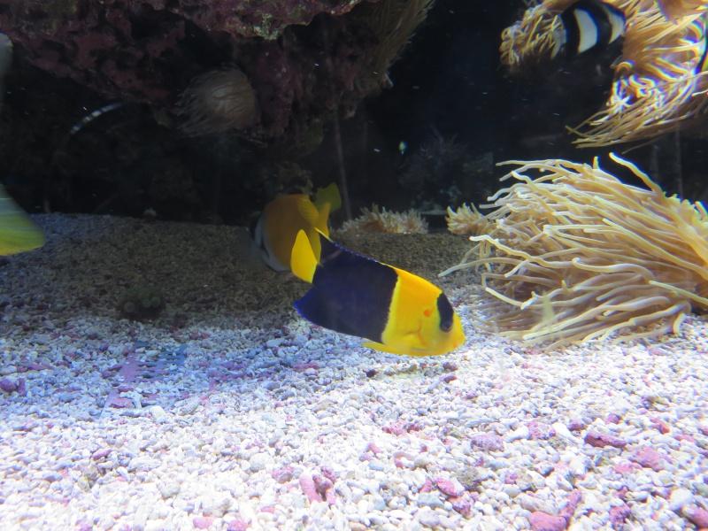 Musée océanographique de Monaco Img_1216