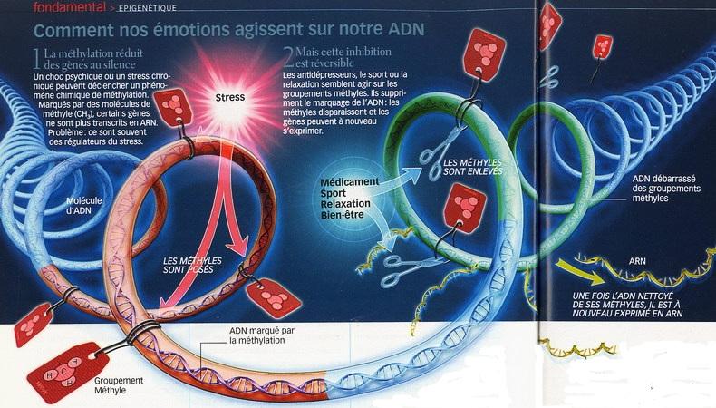 Nos humeurs modifient constamment notre ADN Adn0410