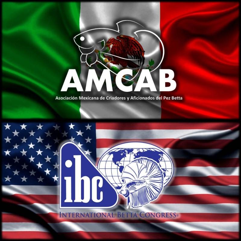Convocatoria y Bases del Primer Concurso AMCAB IBC México  Amcab_10