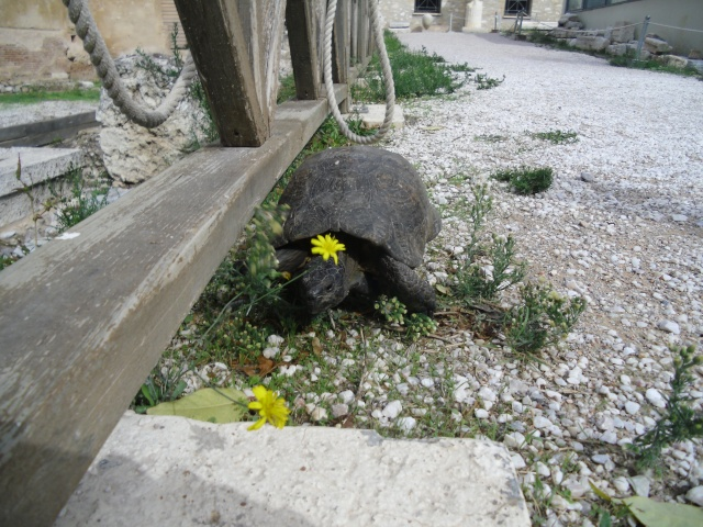 La Grèce (enfin je vous fais un fil !) [Voyage] Cimg2914