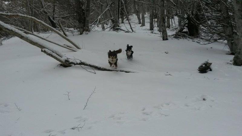 POGO (chien croisé berger) - Page 2 12575810