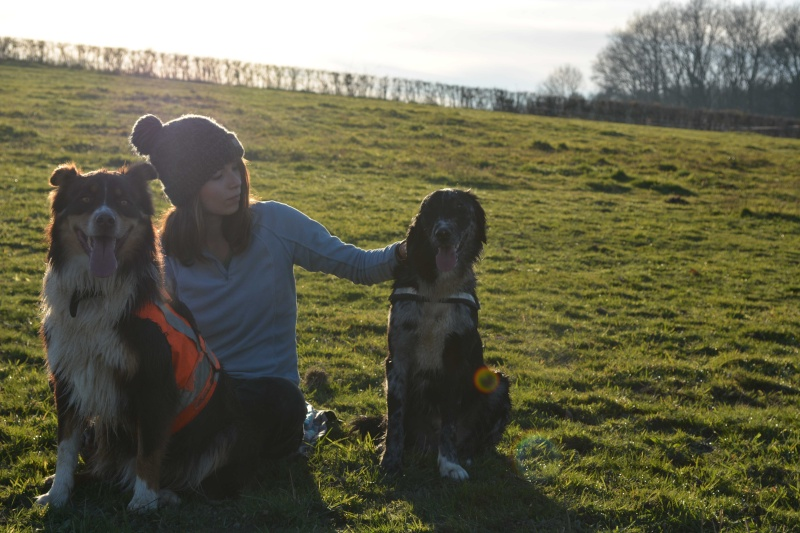 POGO (chien croisé berger) - Page 2 Dsc_6611